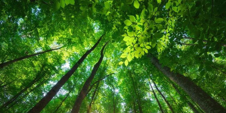 bring-nature-indoors.jpg